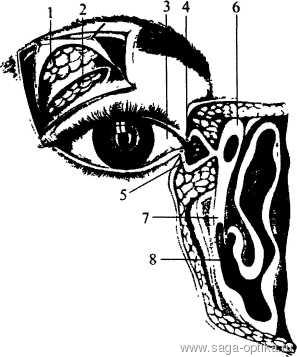 Синдром сухого глаза. Рис. 2
